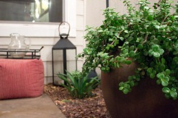 Plants and outdoor decor from my patio makeover. | The Happy Home Therapist
